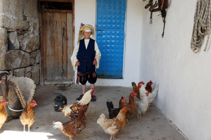 Çomakdağ Köyünde Tavuklar